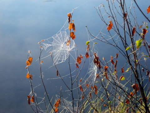 spiders web, grassy lake, northern ontario